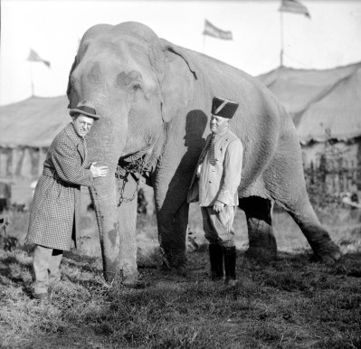 Ringling Brothers Circus elephant with Karl Kae Knecht. Source: Thomas Mueller Photographic Collection, MSS 264-2772, University Archives and Special Collections, USI