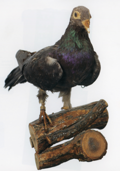 "Homing Pigeon, President Wilson. U.S. Army Museum Support Center, Ft. Belvoir, VA. Source: ""The Great War. U.S. Army art"". Washington, D.C: Center of Military History, United States Army, 2018. Special Collections, D522 .G66 2018."