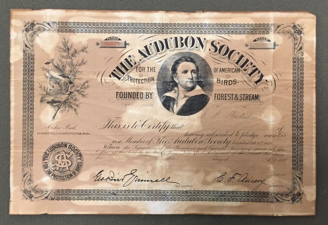 Membership Certificate from the Audubon Society.